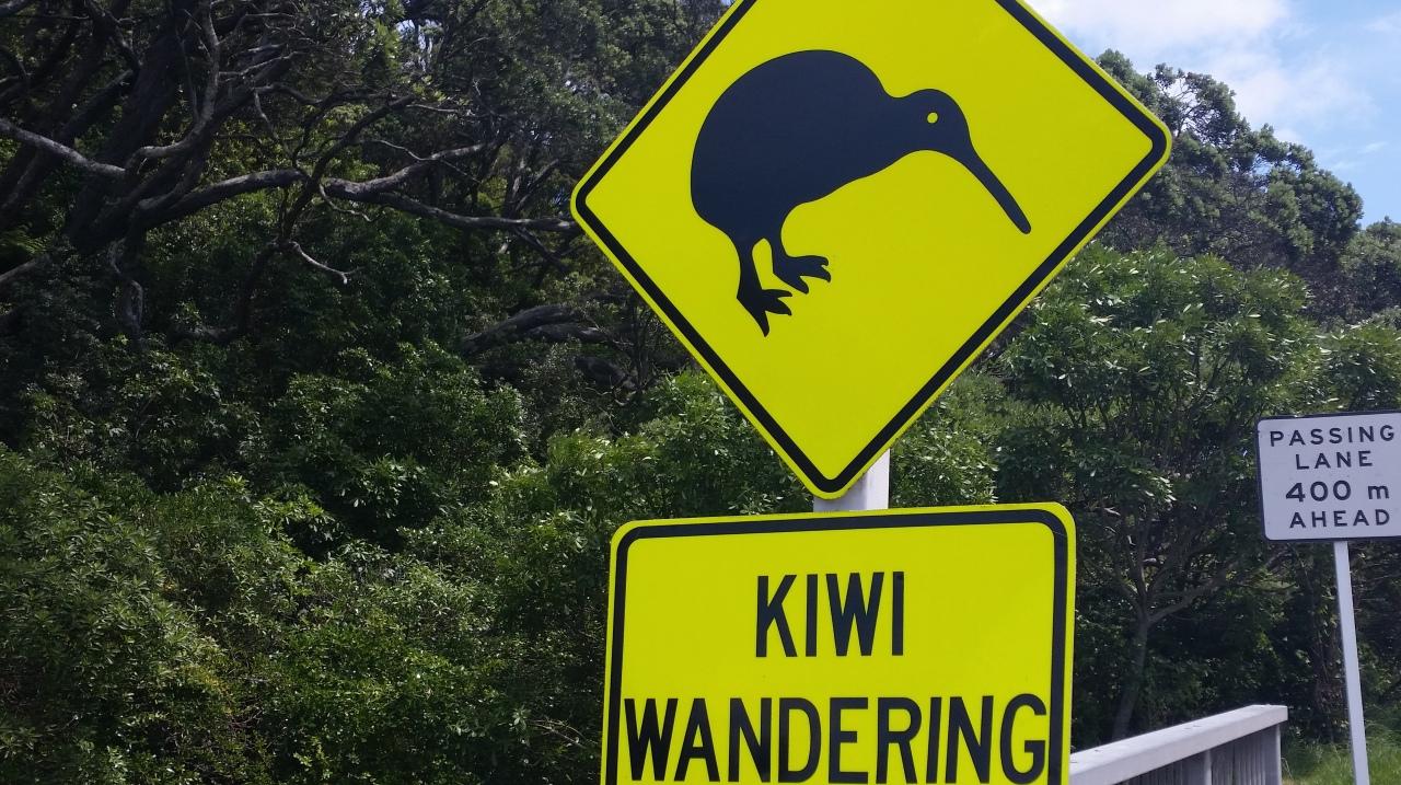 Kiwis Wandering…